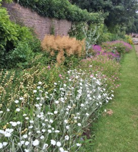 In the Great Garden - the North Terrace border